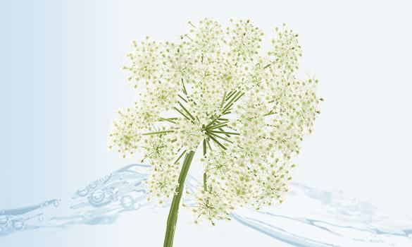 bloc fleur d'eau angelique