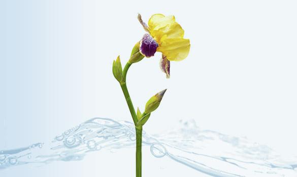 bloc fleur d'eau iris