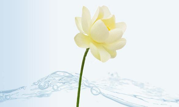 blocs-fleurs-d-eau-nymphea-la-source
