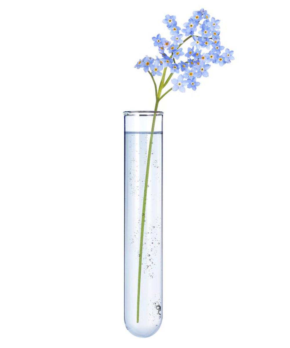 Les fleurs d'eau bio